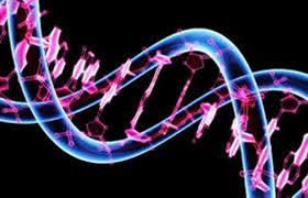 Informasi atau Kode Genetik