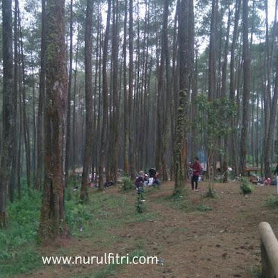 Berlibur di Hutan Pinus Cikole Bandung
