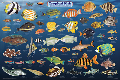 the most popular types of the family group of fishes include the