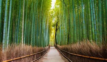 Gambar Hutan Terindah di Dunia 2