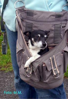 un caine in geanta