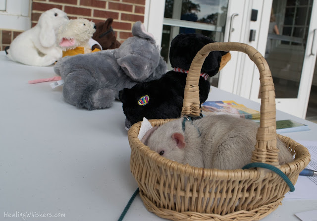 Oliver in a line of plush animals