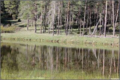 Lagunillo en el cauce del Río Escabas en la Cañada Del Mostajo. Vista lateral