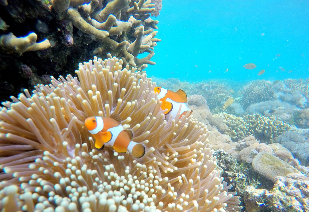 Gambar Gili Gambir Destinasi Menarik Di Lombok