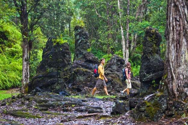The Lava Trees Forest