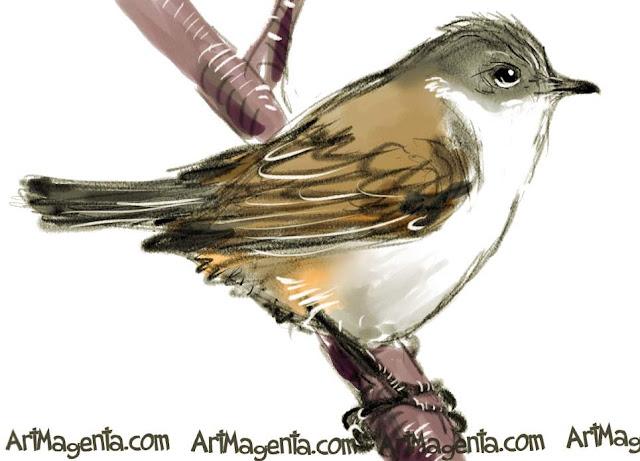 The Lesser Whitethroat sketch painting. Bird art drawing by illustrator Artmagenta.
