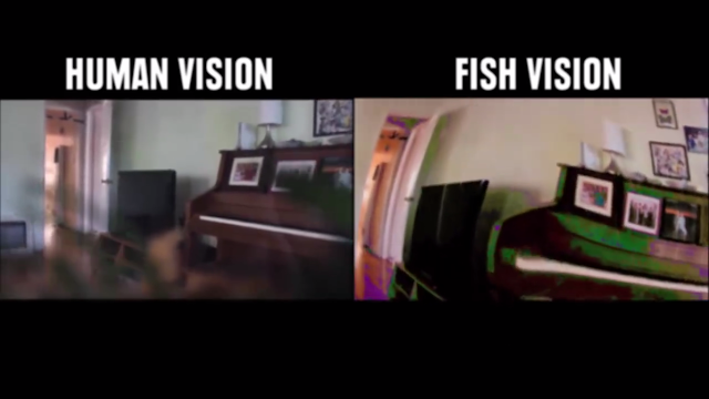 Penglihatan Ikan