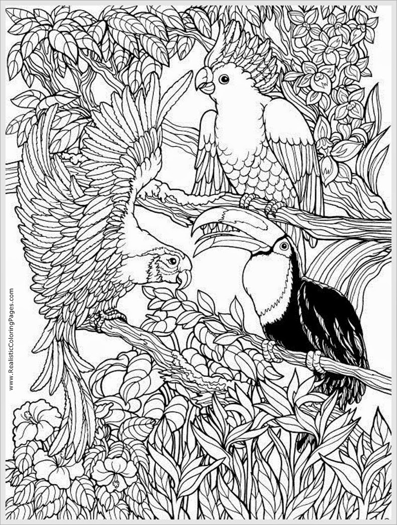 pages realistic coloring pages parrots bird adult free coloring pages