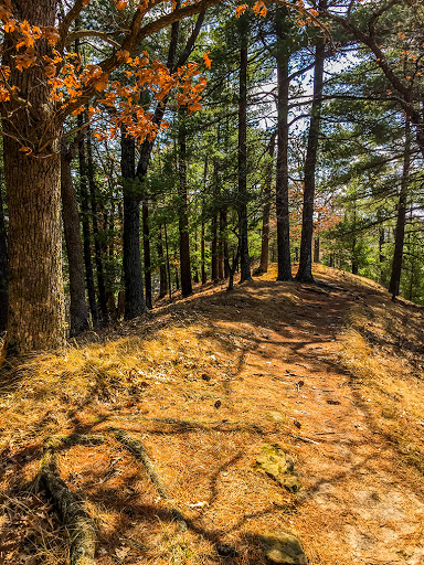 pine forest ontop of sandstone escarpment