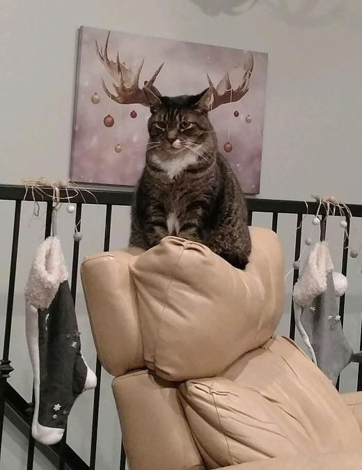 кот и картина с рогами