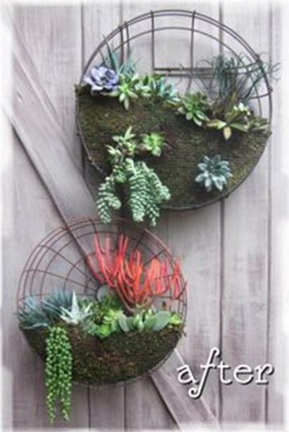 16. Kerangka kipas angin bekas juga bisa dijadikan pot succulent.