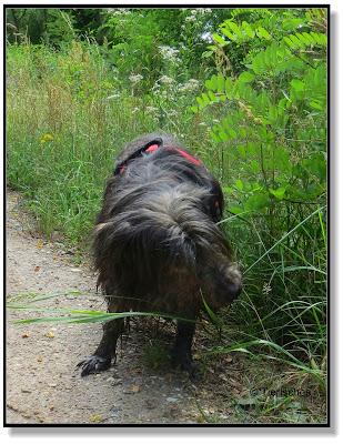 Nasenarbeit bei Hunden