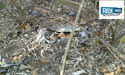 Ossada humana é encontrada na região rural de Nova Floresta
