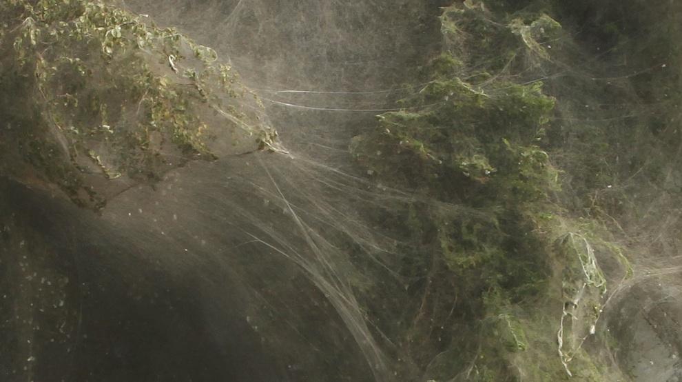 celebrities spy spiderwebs in pakistani trees after 2010 floods 9 images. Black Bedroom Furniture Sets. Home Design Ideas