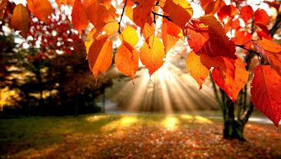 Sonbahar, Sonbaharda Yapraklar Neden Dökülür, Yaprak Dökümü, Ağaçların Özellikleri, Yapraklar Ne İşe Yarar, Yaprakların Özellikleri