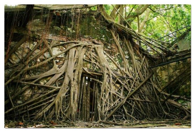 O poder do abraço da natureza em um armazém abandonado