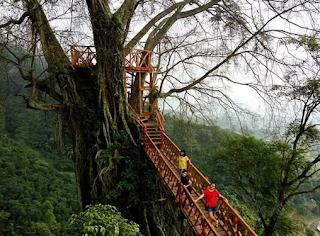 Rumah Pohon Curug Ciherang Jonggol