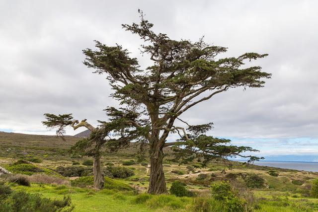 Árbol en el Cabo de Buena Esperanza, Península del Cabo, Sudáfrica