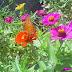 Dia 23 de Setembro - Poema Primavera