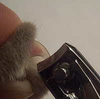 You can use normal human nail clippers to trim your cat's nails.