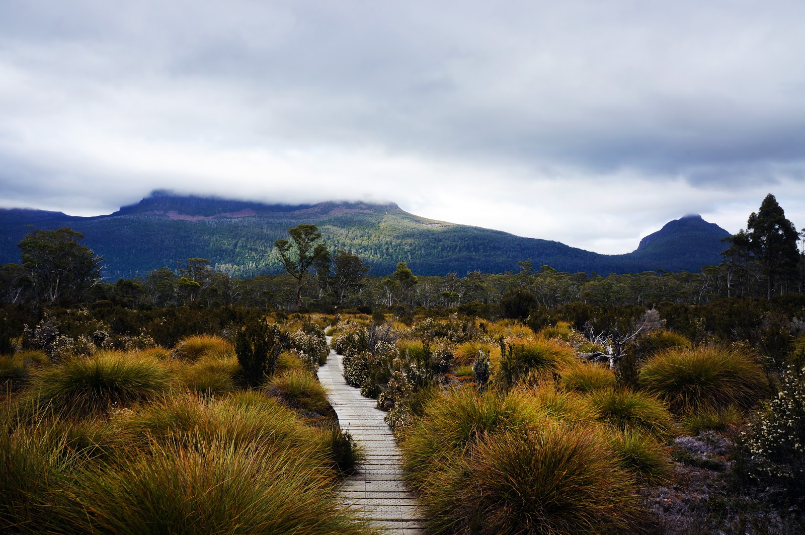 Overland Track (TAS) - Pine Valley to Echo Point ~ The ...