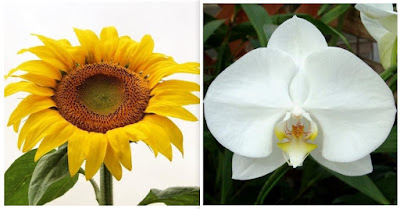 mahkota bunga matahari dan anggrek