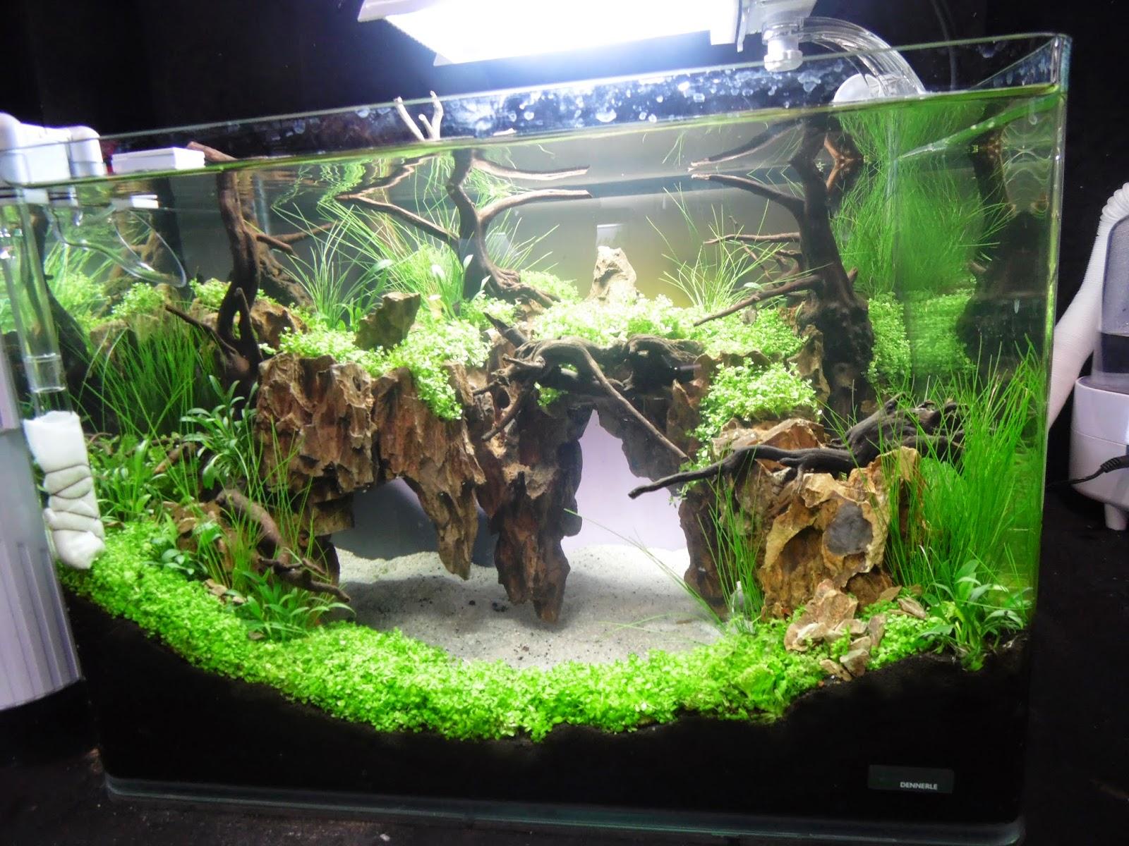 Einem oder mehreren aquarien das rev for Bilder teichfische