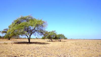 http://mandiriransel.blogspot.co.id/2015/11/bukan-di-afrika-ini-taman-nasional.html