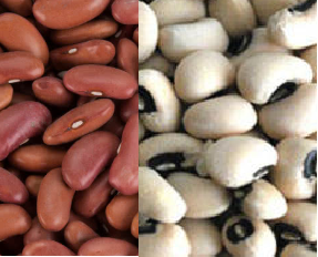 Beans meaning in hindi, Spanish, tamil, telugu, malayalam, urdu, kannada name, gujarati, in marathi, indian name, marathi, tamil, english, other names called as, translation