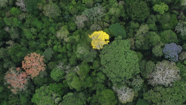 Why tropical forests are so ecologically diverse