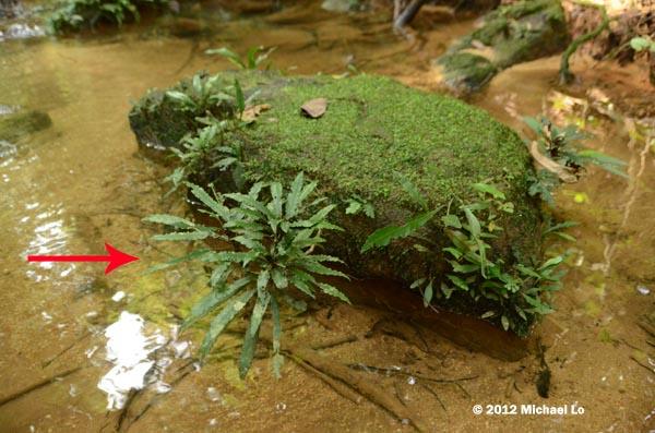 The Rainforests Of Borneo  Southeast Asia Semi Aquatic -9689