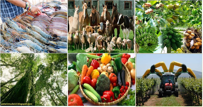 Ruang Lingkup Pertanian ~ PETANI MUDA 12