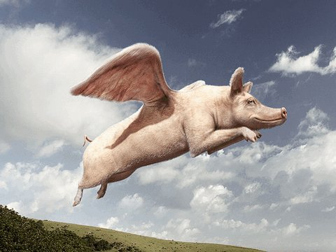 Campbell Newman and his Flying Pig economics