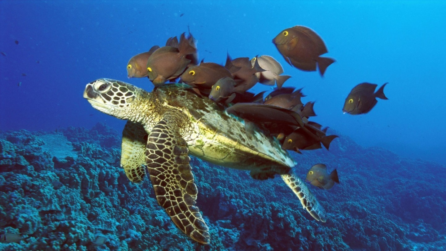 Turtle Wallpapers Pets Cute And Docile