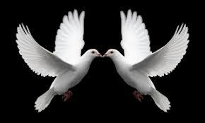 Mengapa Burung Merpati Suka Makan Kerikil Mengapa Burung Merpati Suka Makan Kerikil???