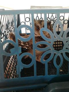 Jual Burung Hantu Celepuk,  Harga Burung Hantu Celepuk,  Toko Burung Hantu Celepuk,  Diskon Burung Hantu Celepuk,  Beli Burung Hantu Celepuk,  Review Burung Hantu Celepuk,  Promo Burung Hantu Celepuk,  Spesifikasi Burung Hantu Celepuk,  Burung Hantu Celepuk Murah,  Burung Hantu Celepuk Asli,  Burung Hantu Celepuk Original,  Burung Hantu Celepuk Jakarta,  Jenis Burung Hantu Celepuk,  Budidaya Burung Hantu Celepuk,  Peternak Burung Hantu Celepuk,  Cara Merawat Burung Hantu Celepuk,  Tips Merawat Burung Hantu Celepuk,  Bagaimana cara merawat Burung Hantu Celepuk,  Bagaimana mengobati Burung Hantu Celepuk,  Ciri-Ciri Hamil Burung Hantu Celepuk,  Kandang Burung Hantu Celepuk,  Ternak Burung Hantu Celepuk,  Makanan Burung Hantu Celepuk,  Burung Hantu Celepuk Termahal,  Adopsi Burung Hantu Celepuk,  Jual Cepat Burung Hantu Celepuk,  Burung Hantu Celepuk  Jakarta,  Burung Hantu Celepuk  Bandung,  Burung Hantu Celepuk  Medan,  Burung Hantu Celepuk  Bali,  Burung Hantu Celepuk  Makassar,  Burung Hantu Celepuk  Jambi,  Burung Hantu Celepuk  Pekanbaru,  Burung Hantu Celepuk  Palembang,  Burung Hantu Celepuk  Sumatera,  Burung Hantu Celepuk  Langsa,  Burung Hantu Celepuk  Lhokseumawe,  Burung Hantu Celepuk  Meulaboh,  Burung Hantu Celepuk  Sabang,  Burung Hantu Celepuk  Subulussalam,  Burung Hantu Celepuk  Denpasar,  Burung Hantu Celepuk  Pangkalpinang,  Burung Hantu Celepuk  Cilegon,  Burung Hantu Celepuk  Serang,  Burung Hantu Celepuk  Tangerang Selatan,  Burung Hantu Celepuk  Tangerang,  Burung Hantu Celepuk  Bengkulu,  Burung Hantu Celepuk  Gorontalo,  Burung Hantu Celepuk  louhan,  Burung Hantu Celepuk  flowerhorn,  Burung Hantu Celepuk  king kamfa,  Burung Hantu Celepuk  kamfa,  Burung Hantu Celepuk  flowerhorn fish,  Burung Hantu Celepuk  flower horn fish,  Burung Hantu Celepuk  flower horn,  Burung Hantu Celepuk  flowerhorn fish for sale,  Burung Hantu Celepuk  flowerhorn for sale,  Burung Hantu Celepuk  flowerhorn cichlid,  Burung Hantu Celepuk  flowerhorn fish food,  B