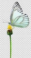 https://www.encywiki.com/2019/09/free-png-download-butterfly.html