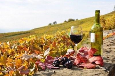 Resultado de imagem para vinhos outono