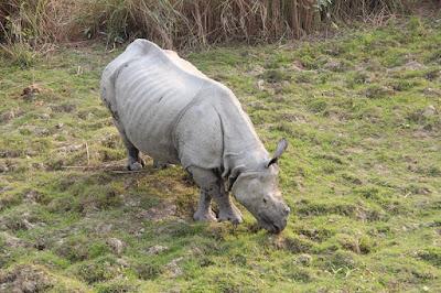 Travelling Kaziranga National Park, Wildlife Tour India