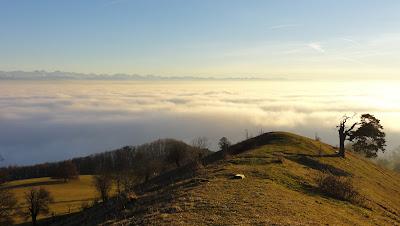 Oensinger Roggen mit Nebelmeer