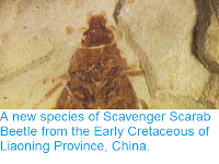 http://sciencythoughts.blogspot.co.uk/2013/10/a-new-species-of-scavenger-scarab.html