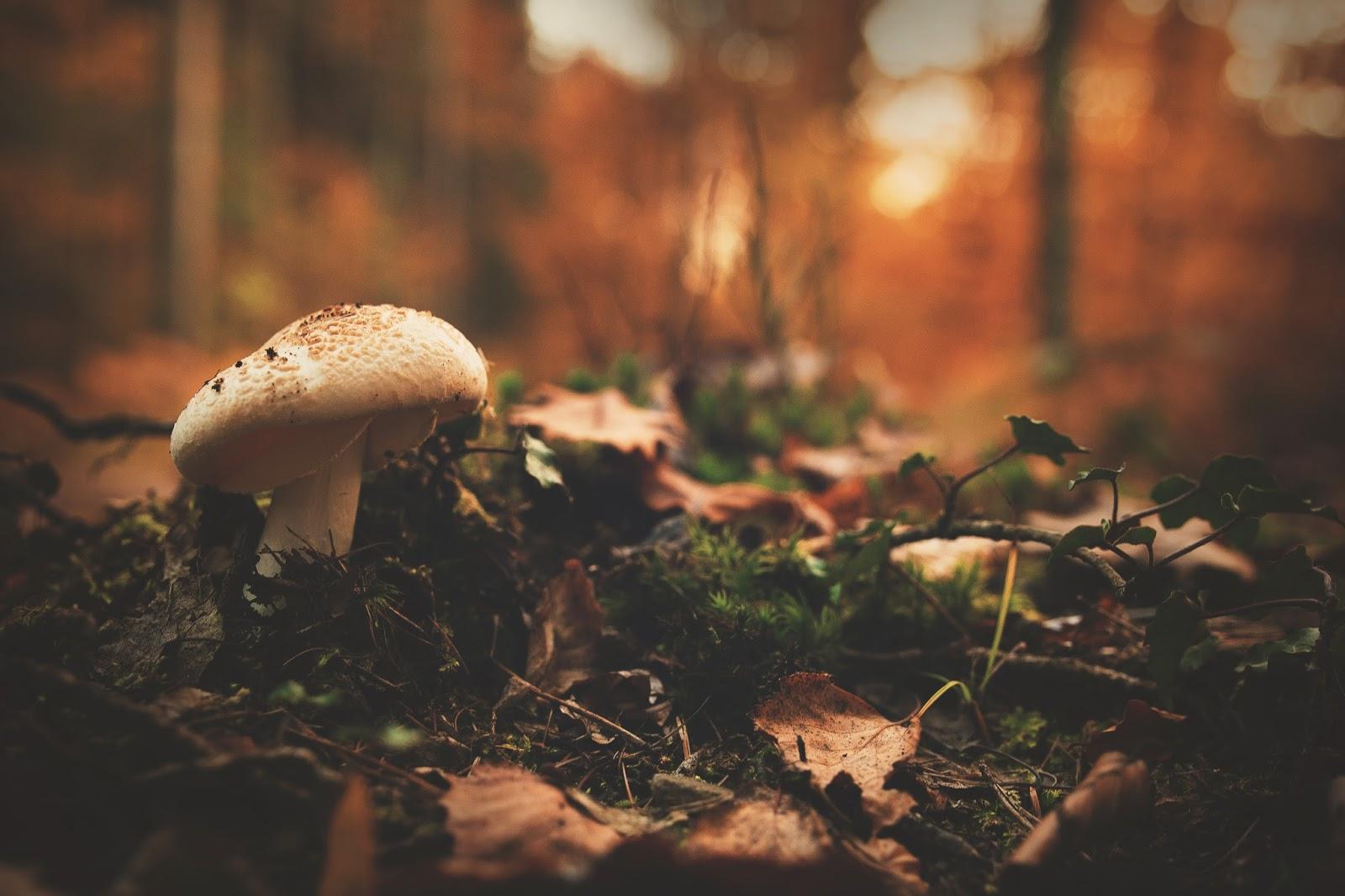 Mushroom In The Forest Between Leaves Desktop Wallpaper