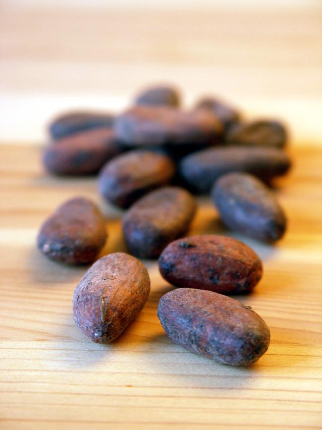ziarno kakaowca zanim stanie się czekoladą