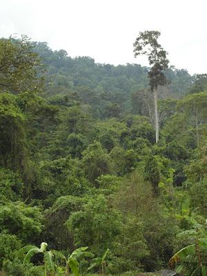 Persebaran Hutan Hujan Tropis Di Indonesia Serta Flora Dan Fauna