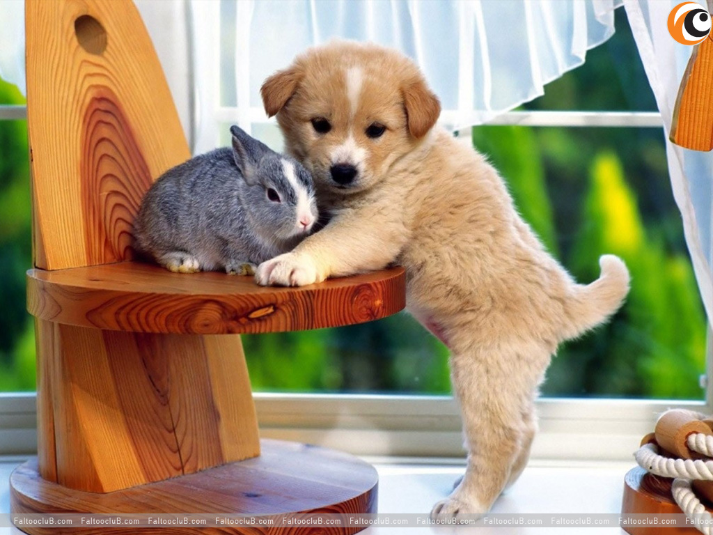 Lovely Pet Wallpaper, Lovely Pets Pictures & Animal ...