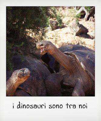 Diego e i suoi amici, tartarughe giganti delle Galapagos