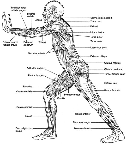diagram of cramp