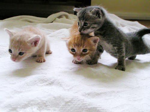 Free Desktop Background Wallpapers Most Beautiful Animal Cute Cat Wallpapers