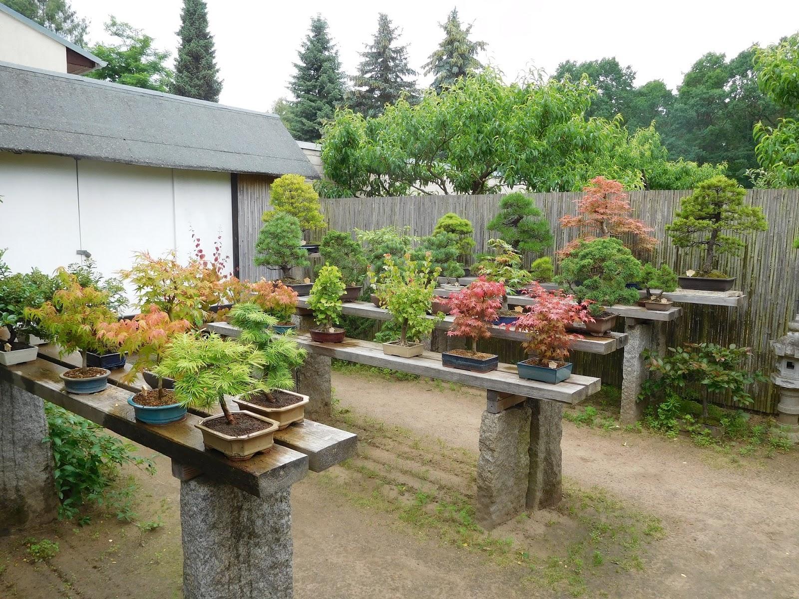 ye min tea friends besuch im bonsaigarten ferch vormittag. Black Bedroom Furniture Sets. Home Design Ideas