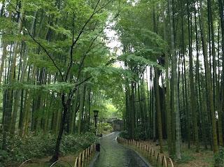 Shuzenji bamboo forest
